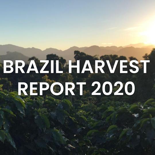 Brazil Harvest Report-1